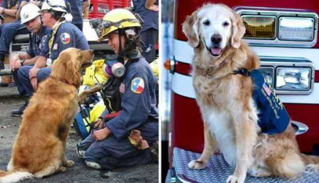 911 dogs_TheDodo