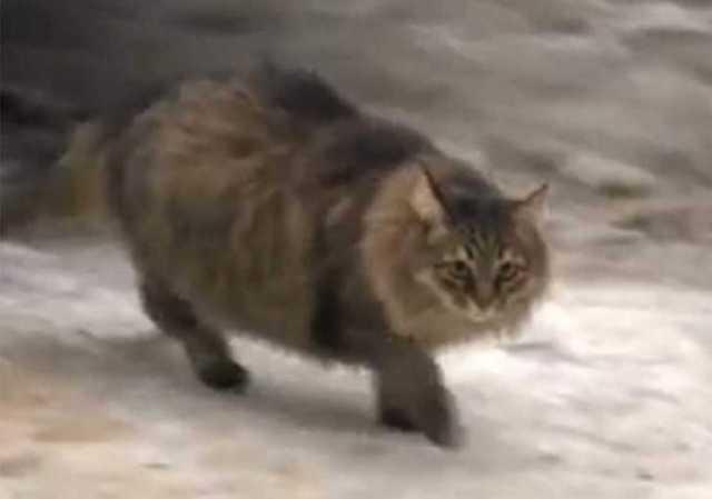 cat_twitter