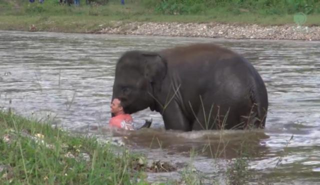 elephant_ChiangraiTimes