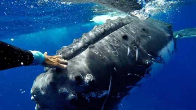 humpbackwhale_tunisiesoir.com