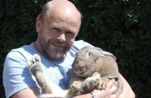 rabbit_honesttopaws.boredomtherapy.com